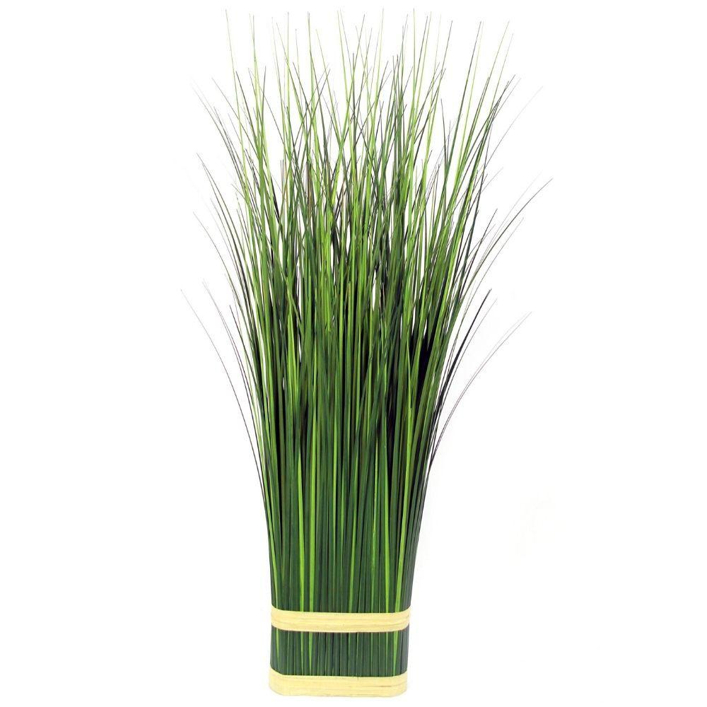 Planta pasto ovalado 1m verde
