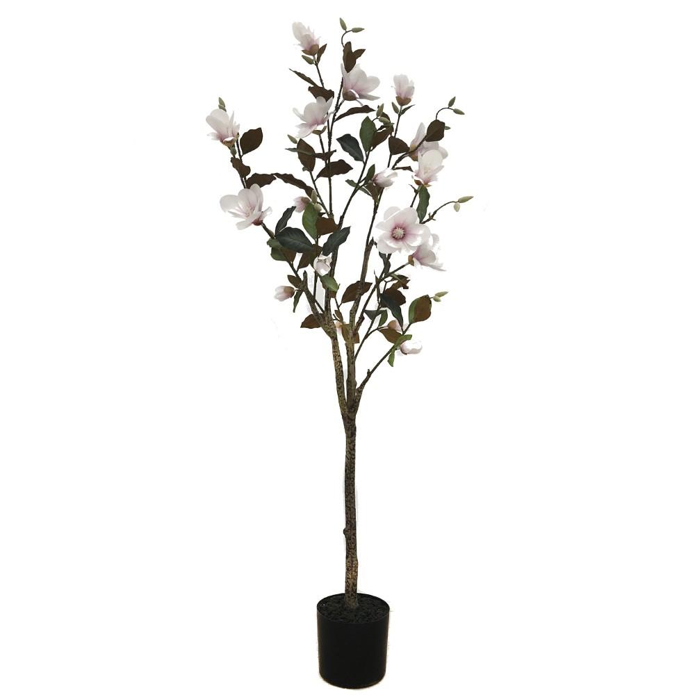 Planta magnolia 1,5m
