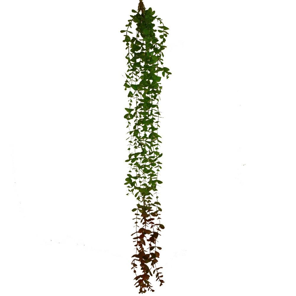 Enredadera eucaliptus 105cm variegado
