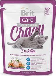 Cat kitten crazy