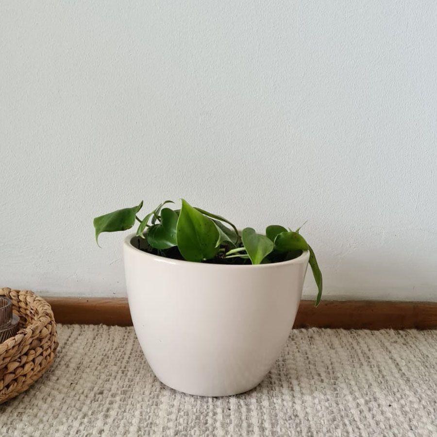 Cordatum cerámica crema