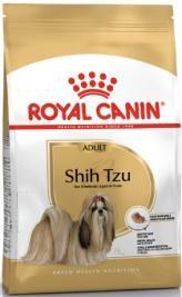 Shih-Tzu adulto