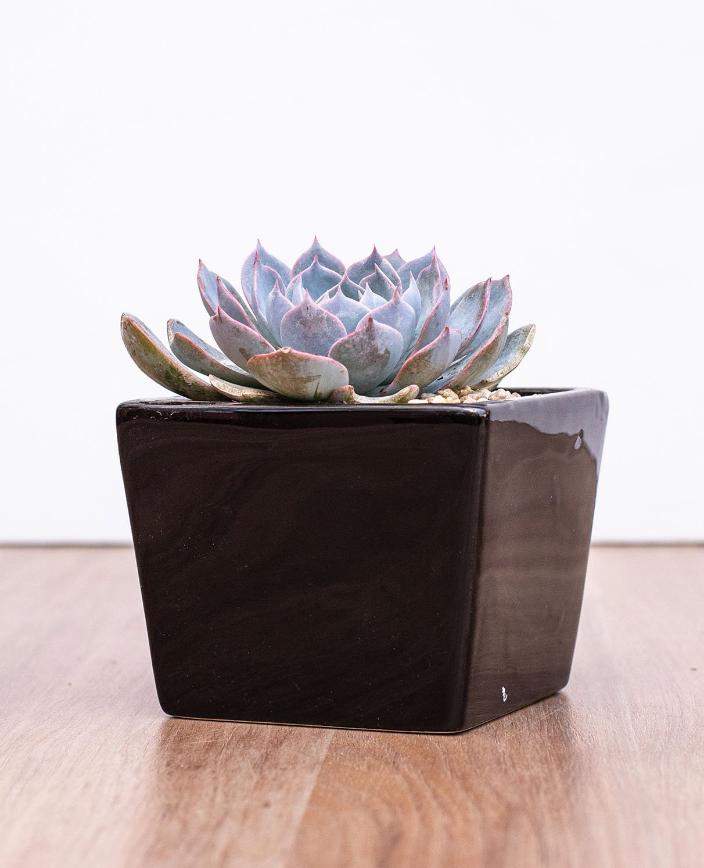 Suculenta macetero cubo negro ceramica