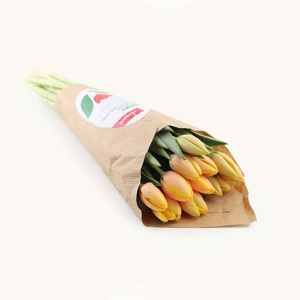 Longo's Orange Tulips