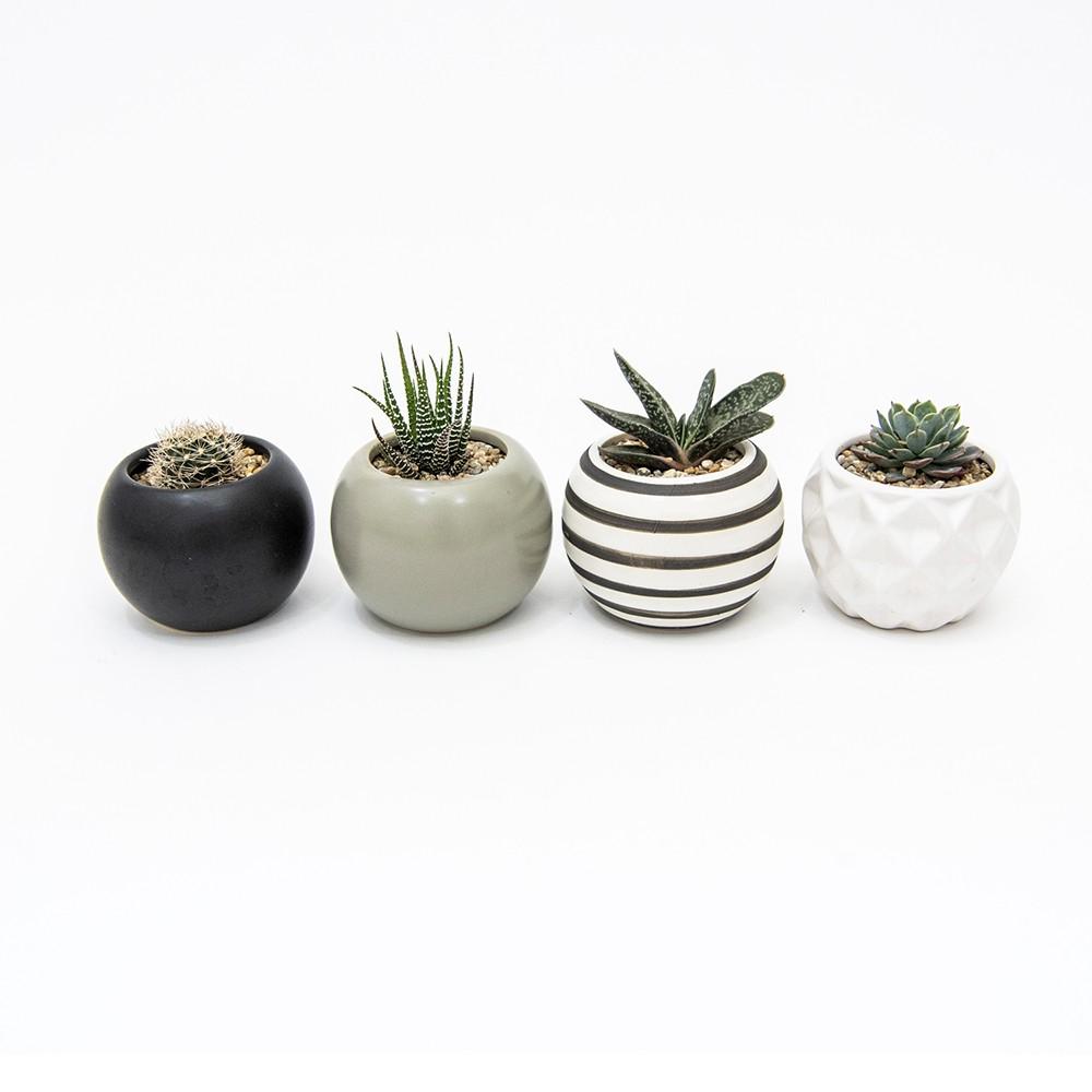 Set 4 suculentas maceteros cerámica