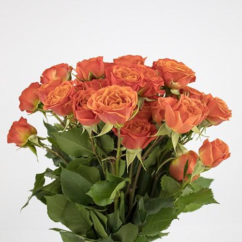 Mini rosas naranja capuchón celofán