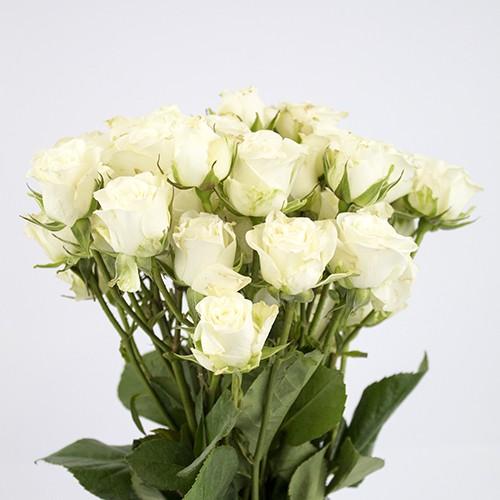 Mini rosas blancas capuchón celofán