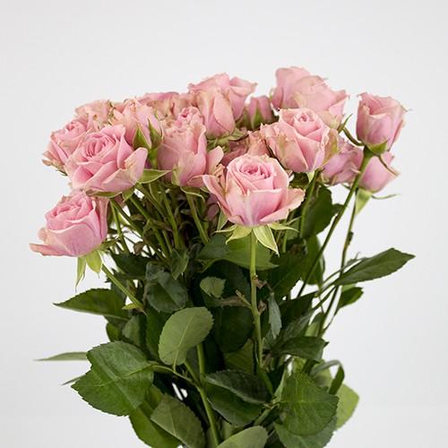 Mini rosas rosadas capuchón celofán