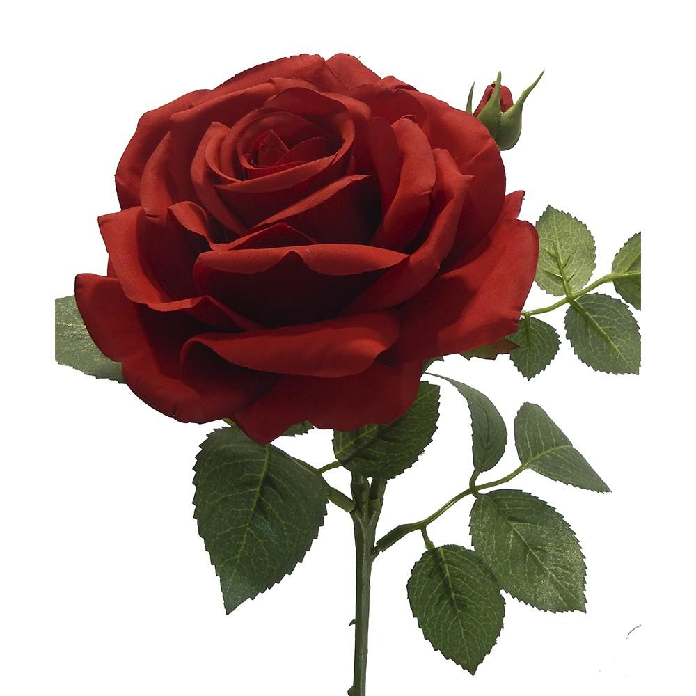 Rosa maggi rojo