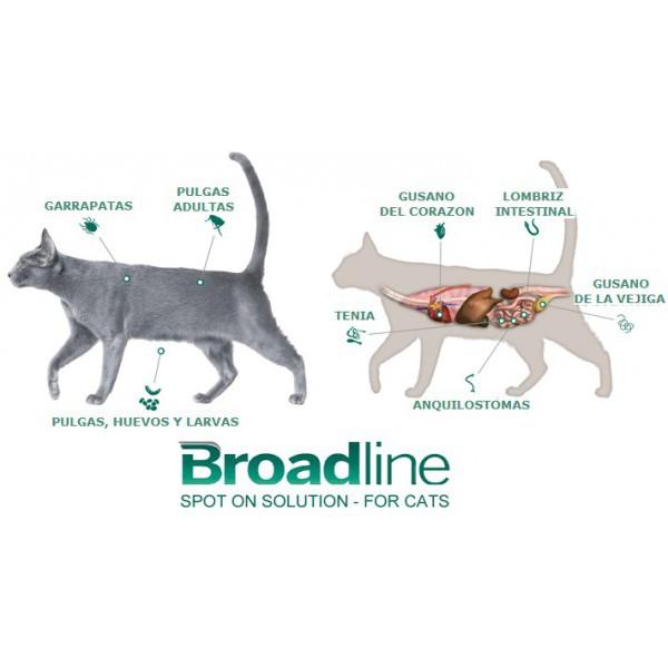 Pipeta gatos 2,5 a 7,5 kg 1 pipeta